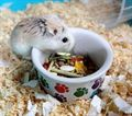 PPC1_InCageWithHamster