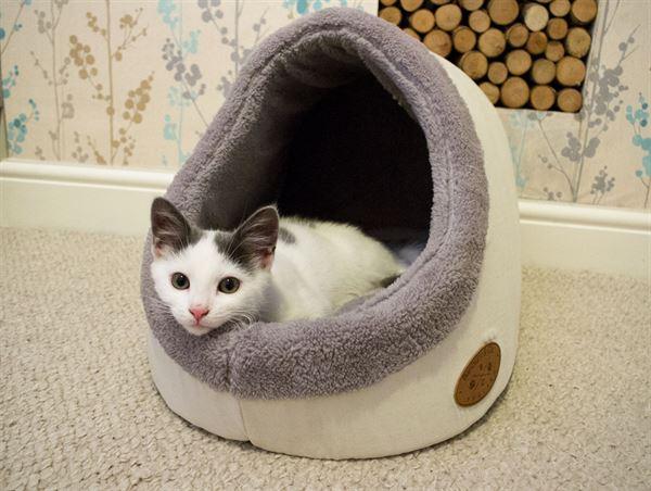 Banbury Amp Co Luxury Cosy Cat Bed Pet Brands Ltd